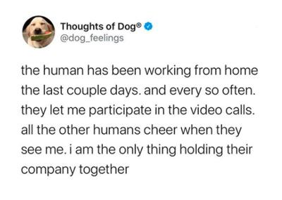 @dog_feelings